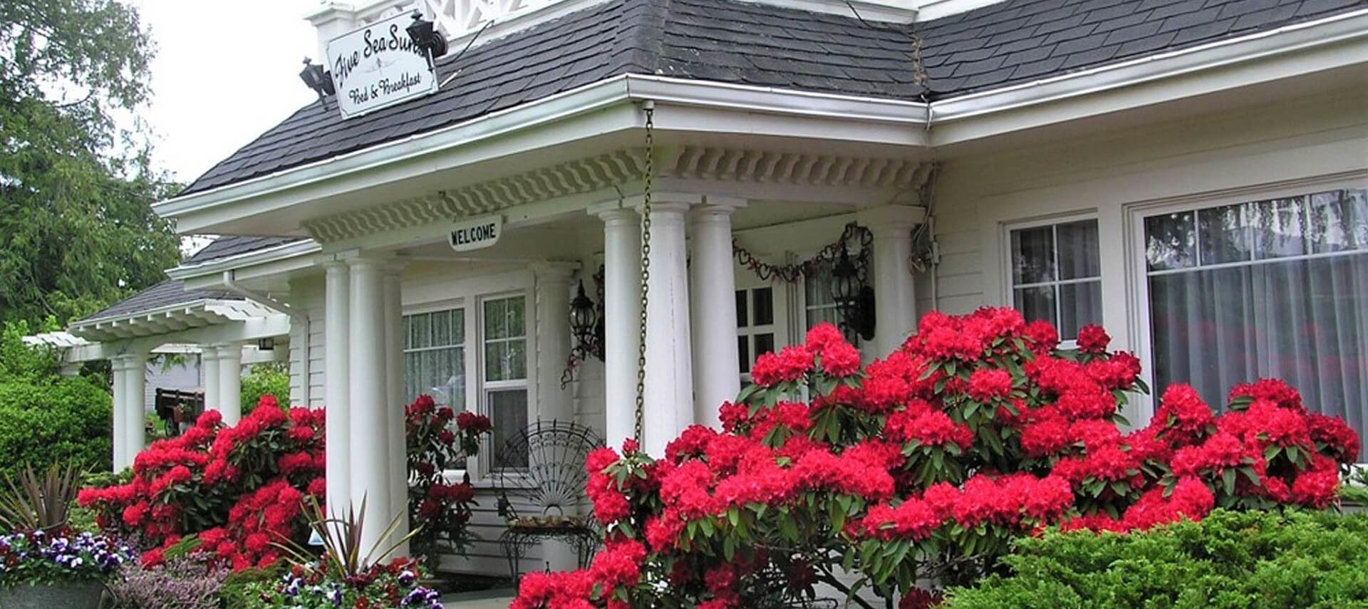 Front facade of a beautiful white home with columns, front porch flanked with large bushes full of red flowers